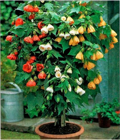 цветы из полиэтилена