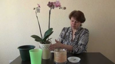 Как выбрать горшок для орхидей