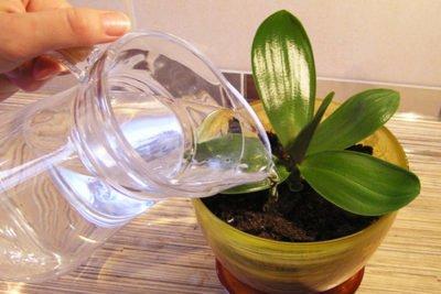 Какой водой поливать орхидею?
