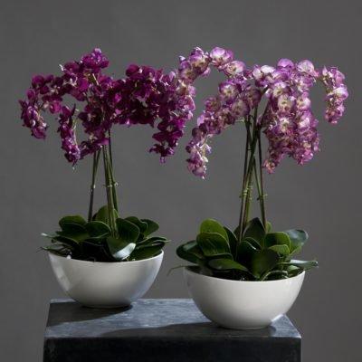 Особенности посадки орхидеи в горшок