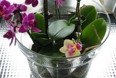 Полив орхидеи в разное время года