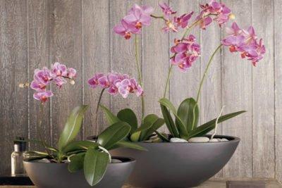 Значение размера горшка для орхидеи