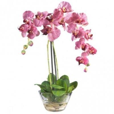 Обязательно ли орхидею сажать в прозрачный горшок?
