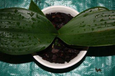 Какой грунт необходим для орхидеи?